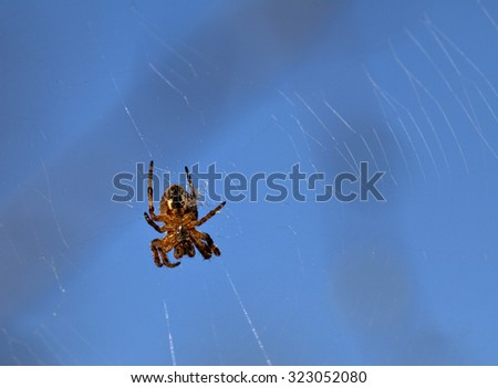 Spider on web against clear blue sky - stock photo