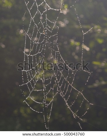 Spider's net with dewdrops against dark background