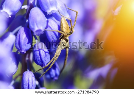 spider sitting on a flower - stock photo