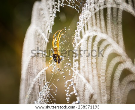 spider sitting on his web
