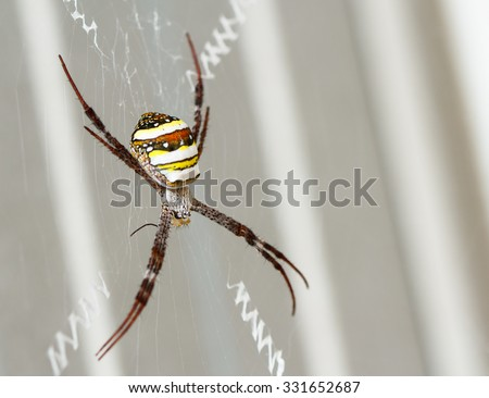 Spider waiting on a web