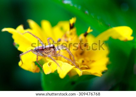 Spider walk on wild flower in rainforest, Thailand.