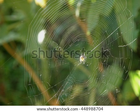 Spider Weaves a Web. Waiting for Prey. Predator of Wildlife.    - stock photo
