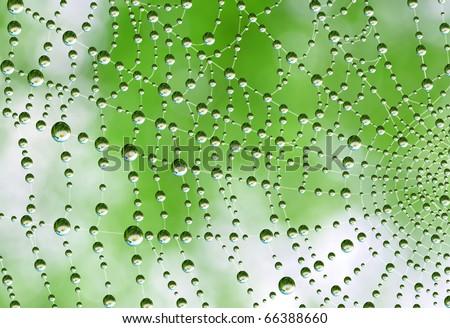 spider-web - stock photo