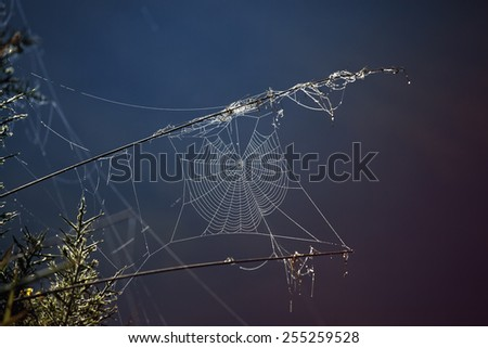 Spider web all in dew drops glistening in the morning sun - stock photo