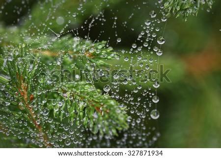 Spider Web and Rain Drops - stock photo
