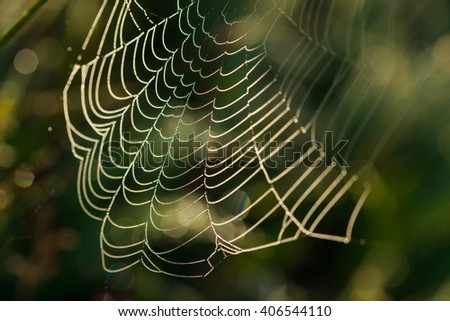 Spider web close-up with dew drops on it - stock photo