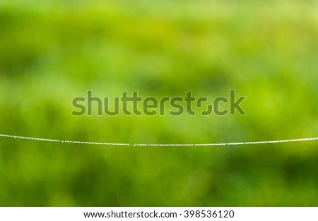 Spider web (Cobweb) with dew drops on a green background  - stock photo
