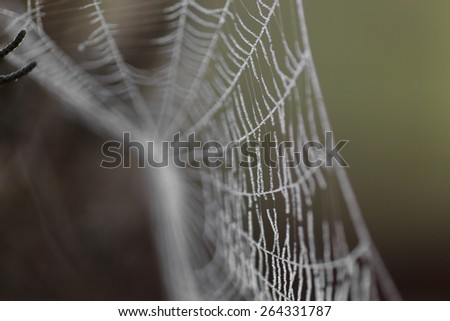 Spider web covered by water droplets -selective blur