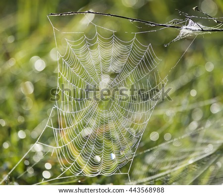 spider web covered in water drops - stock photo