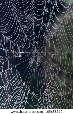 Spider web features in northern China in the morning