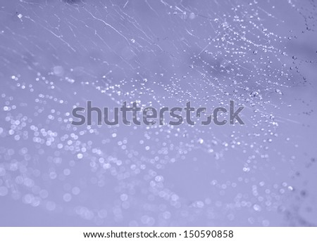 spider web in drops rossy on a blue background - stock photo