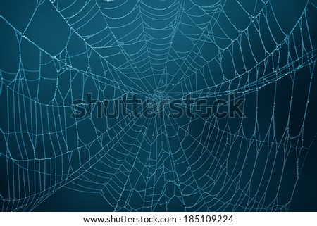 Spider Web in the darkness - stock photo