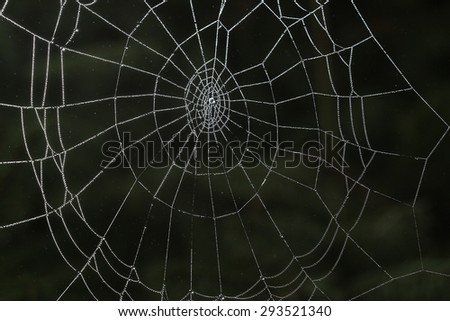 spider web in the forest