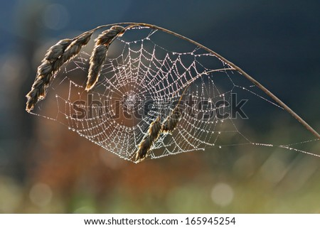 Spider web with dew against the light in Spain. - stock photo