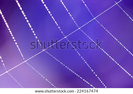 Spider web with dew drops isolated on blur blue purple background.  - stock photo