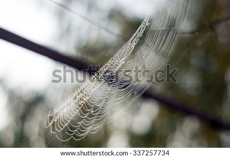 Spider web with dew during sunrise in an early November morning - Water drops - stock photo