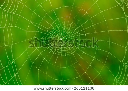 Spider web with water drops background - stock photo