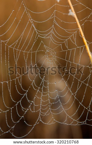 Spider web with water drops on the blurred brown background