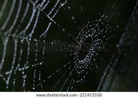 Spider webs in nature - stock photo