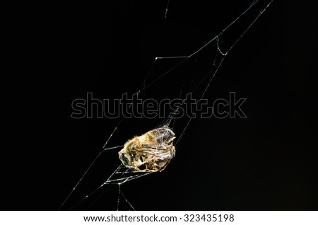 Spider webs trap insects - stock photo