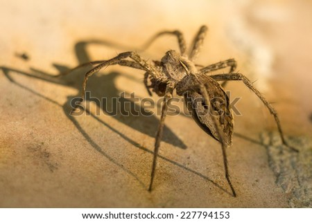 Spider with long legs at close up