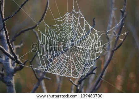 Spiders web with morning dew
