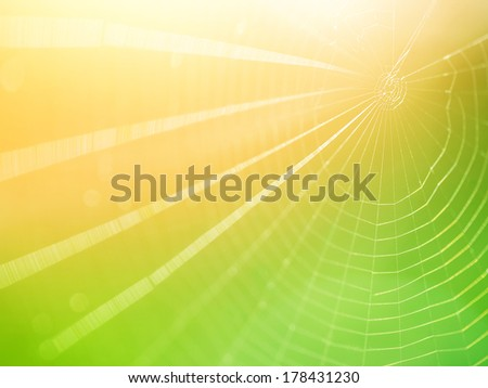 Spiderweb background, bright yellow sun light, network of spider, spring season, beauty of wild nature concept - stock photo