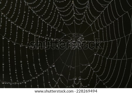 spiderweb with waterdrops in the morning - stock photo