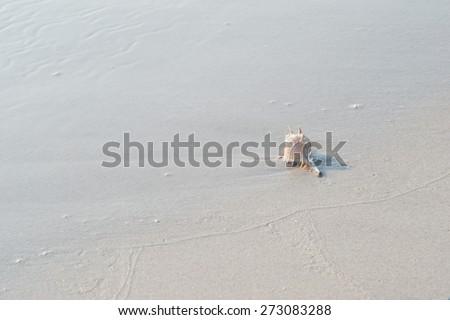 Spike shell on sand beach - stock photo
