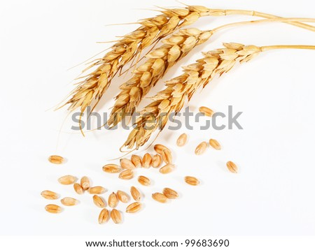 spikelets and grains of wheat on a white background - stock photo