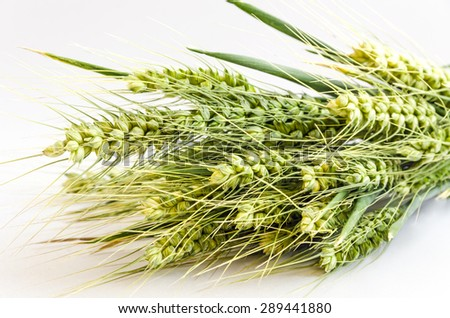 Spikelets of wheat close up on a white background. - stock photo