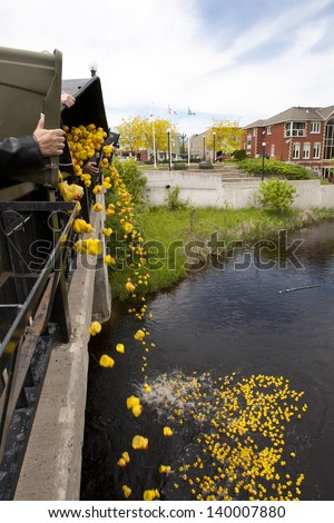 Spilling of the ducks in the fund raiser duck race of the season. - stock photo