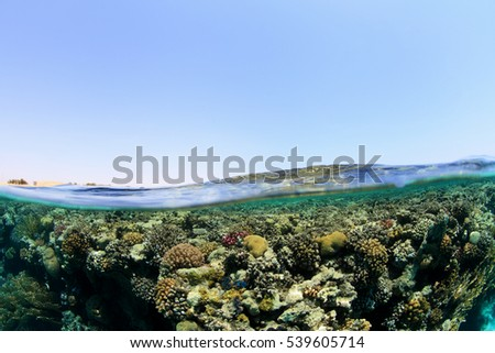 Spilt image of shallow coral reef in the red sea