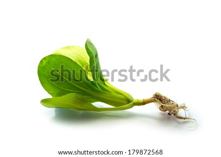 Spinach Isolated on a very white background
