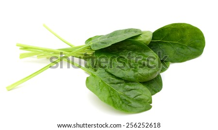 spinach leaves isolated on white  - stock photo