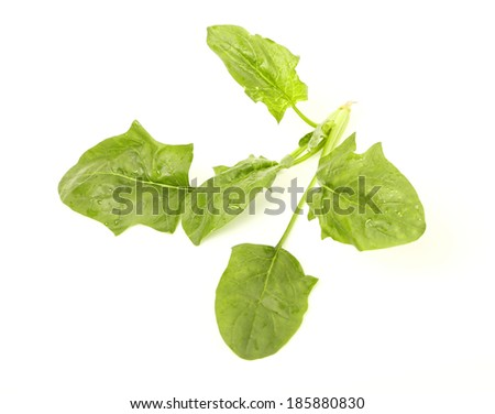 Spinach on white background