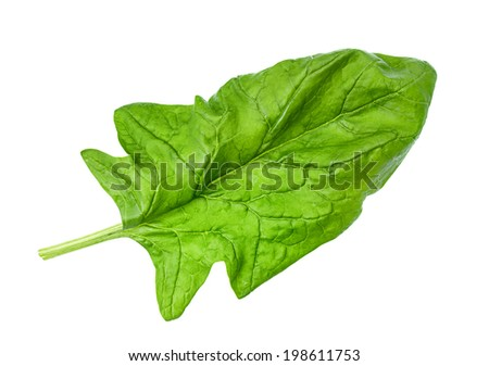 Spinach vegetable closeup isolated on white
