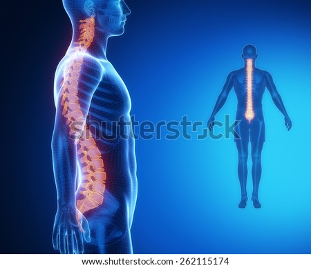 SPINE bone anatomy x-ray scan - stock photo