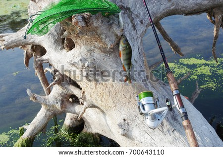 Spinning, fish tank and perch on snag on the river