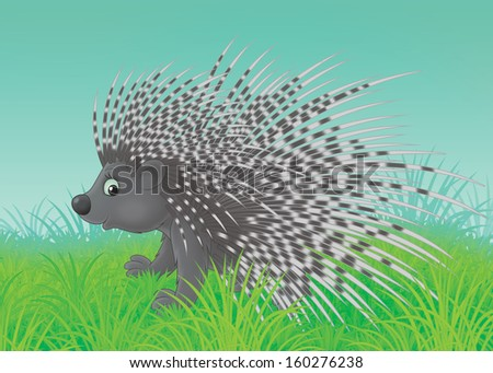Spiny porcupine walking on green grass - stock photo