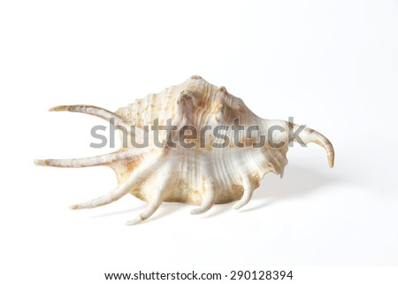 Spiny Sea Shell on White Background with Clipping Path - stock photo