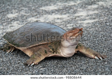 Spiny Stock Photos Images Amp Pictures Shutterstock