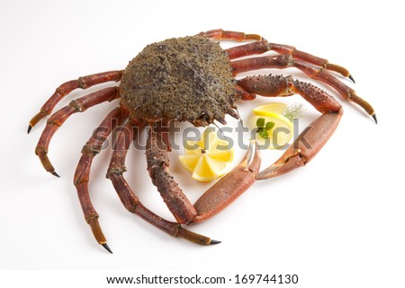 Spiny Spider Crab with lemon and fennel - stock photo