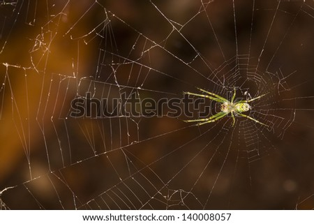 Spiral orb web with spider in the center