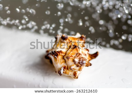 Spiral sea shell and water drops levitating on background spa concept, copyspace - stock photo