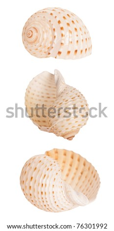 spiral seashell isolated on white background