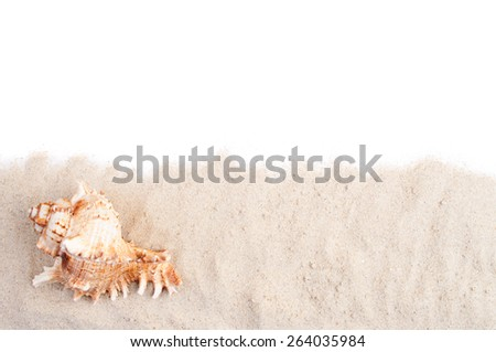 Spiral seashell on the sand and white copy space - stock photo