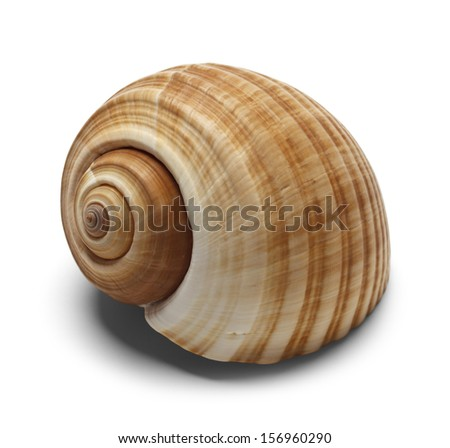 Spiral Shell Isolated on White Background.