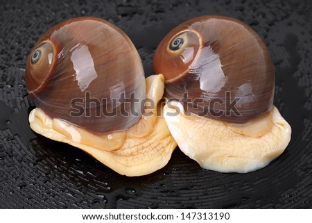 Spiral shells  - stock photo